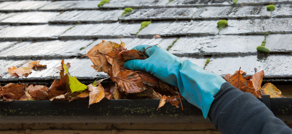 Rubbish removal, Gutter cleaning, Spraying